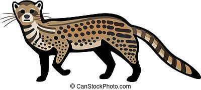 African Civet - vector illustration the African civet cat