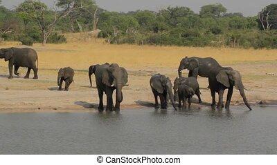 African elephant Africa safari wildlife and wilderness -...