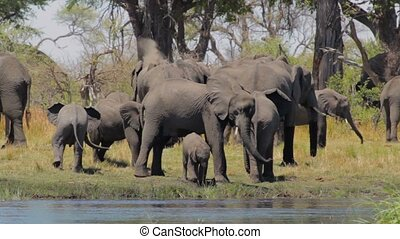 African elephant Africa safari wildlife and wilderness
