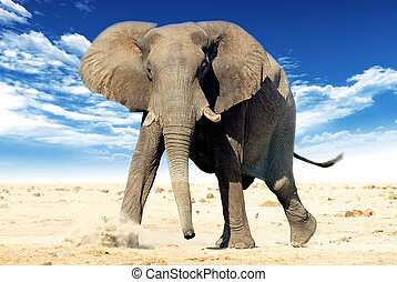 African elephant (Loxodonta africana). Animal in the wild with blue sky and cloud in the background