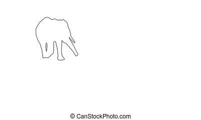 African Elephant moving. On white screen HD 2d line...