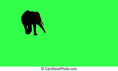 African Elephant moving. Original Green screen HD 3d...