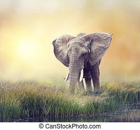 African Elephant near water