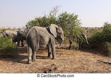 African Elephant Portrait in Remote Bushland