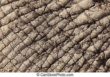 African Elephant Skin
