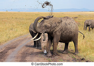 African elephant throwing mud