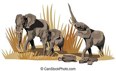 African Elephants on Savannah - Illustration of African...