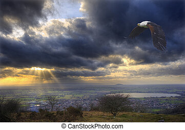 African fish eagle in flight over beautiful landscape and...