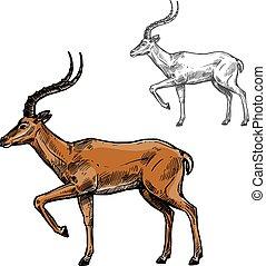 African gazelle or indian antelope animal sketch - Gazelle...