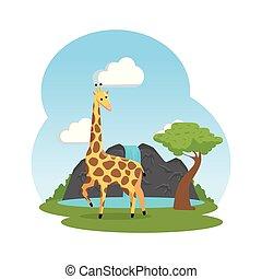african giraffe wildlife animal