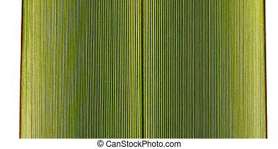 African Iris leaf