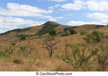 African landscape in the dry season.