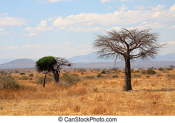 African landscape: thin baobab tree in savanna with...