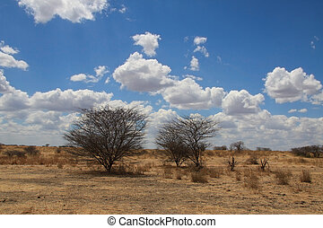 African landscape. Two bushes in savanna on blue sky with...