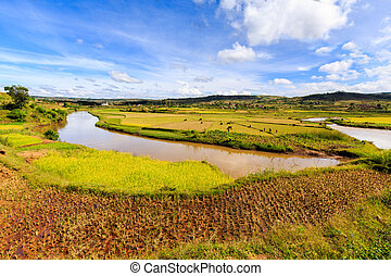 African landscape with river running through rice fields