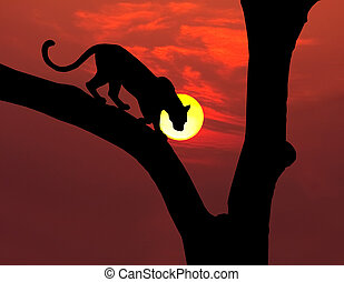 african leopard in tree silhouette with round yellow setting sun and red sky
