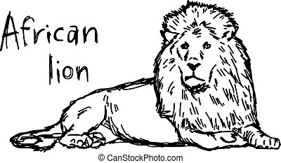 african lion lying - vector illustration sketch hand drawn with black lines, isolated on white background