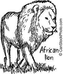 african lion walking - vector illustration sketch hand drawn with black lines, isolated on white background