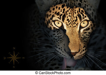 Map of wild africa on leopard's face