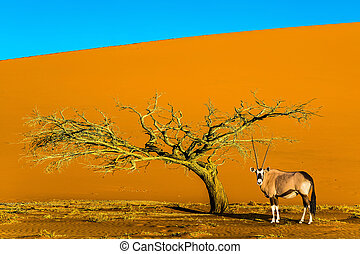 African Oryx gaselle standing at the road