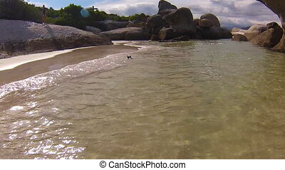 African penguins colony in Boulder Beach - Penguins swimming...
