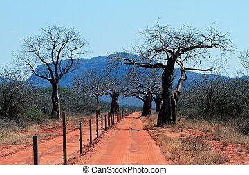 African red road