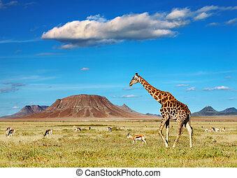 African savanna with giraffe and grazing antelopes