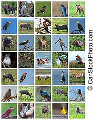 African safari collage. Wildlife variety