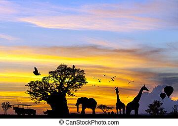 African safari scene at sunset. - Conceptual african safari...