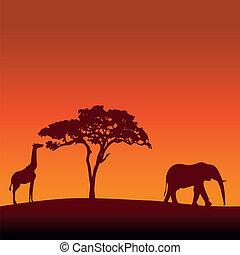 African Safari Silhouette Vector Ba