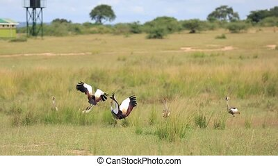 African savanna landscape with a flock of flying of crowned cranes