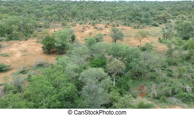 Aerial view panorama of African savanna landscape.