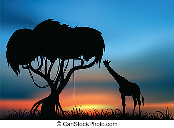 African savanna with giraffe