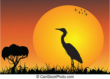 African savanna with heron at the sunsrise