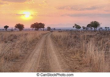 African Savannah - Sunset over the dry African Savannah,...