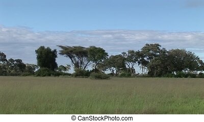 African savannah summer pictrures wild safari Tanzania...