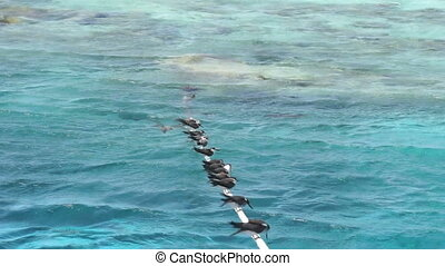 african sealife
