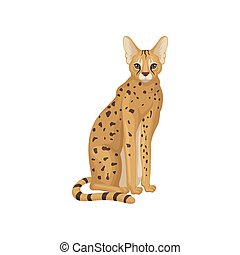 African serval in sitting position. Wild cat with large...