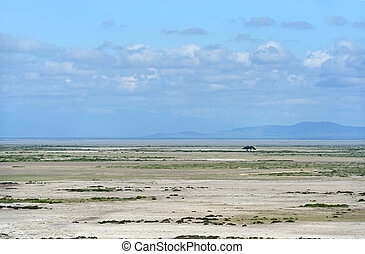 African shroud - Desert African savannah in Amboseli ...
