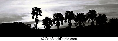 African Sky - Landscape with palm trees and evening sky at...