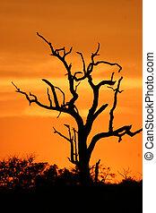 African sunset 3