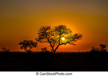 African sunset - Beautiful african landscape at sunset with...