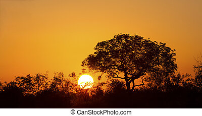 African sunset with a tree silhouette and large orange sun