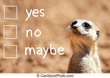 A portrait of a cute african suricate making decision over light brown background