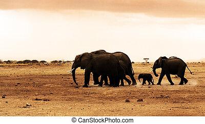 African safari, wild elephants family and landscape of Amboseli National Park, Kenya