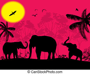 African wildlife at sunset