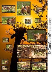 African Wildlife Collage