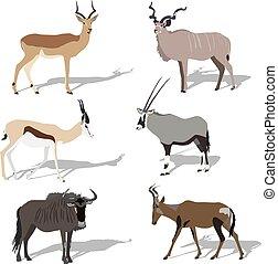 African_antelope1.eps