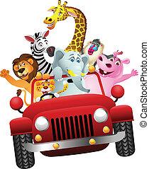 africano, animales, en, coche rojo