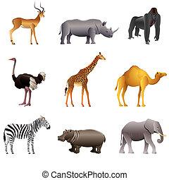 africano, animales, vector, conjunto